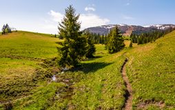 Path through grassy slope in to the forest. Beautiful springtime landscape with snowy mountain tops in the distance Royalty Free Stock Images