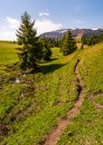 Path through grassy slope in to the forest. Beautiful springtime landscape with snowy mountain tops in the distance Stock Photos