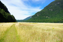 Path through grassy valley of Rees Track along Dart River. Stock Photo
