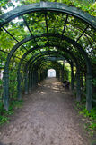 Path in green arch in park. Path in green arch in the park Royalty Free Stock Image