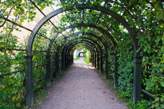 Path in green arch in the park. Path in the green arch in the park Stock Photo