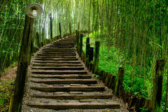 Path in green bamboo forest. Scenic view of wooden pathway receding through green bamboo forest Royalty Free Stock Photography