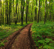 Path in green deciduous forest, nature background Stock Photos