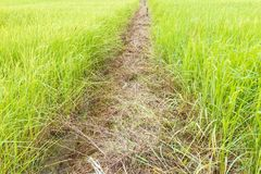 Path in Green field Royalty Free Stock Photo