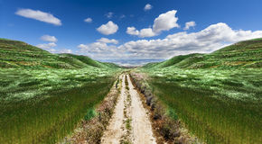 Path through the green field Royalty Free Stock Photo