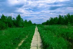 Path in the summer field Royalty Free Stock Photos