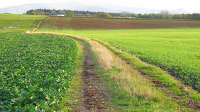 Path in the green fields Stock Photos