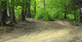 Path in a green forest. Footpath in a beautiful green summer forest Stock Photos