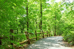 Path in green forest stock image