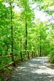 Path in green forest stock photography