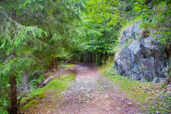A path through the green forest Royalty Free Stock Photos