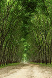 Path in the green forest Royalty Free Stock Photos