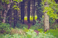 Path through green forest Royalty Free Stock Photo