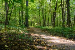 Path in the green forest. In early autumn Stock Image