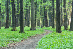 Path in the green forest Stock Photos