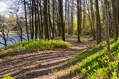Path through the green forest floor next to the salmon river Tovdalselva, in Kristiansand, Norway. Path through green spring vegetation with shadows from trees Stock Photo