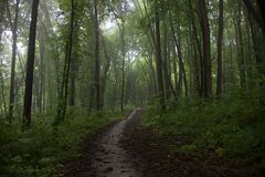 The path in a green forest in foggy weather Stock Photography
