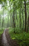The path in a green forest in foggy weather Stock Photos