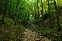 Path through the green forest. Forest path goes through the green woods Stock Photos