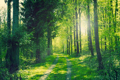 Path in a green forest Stock Photos