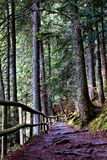 Path through green forest in the mountains Stock Photo