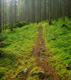 Path in a green forest. Narrow path in a green forest Royalty Free Stock Image