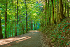 Path by the green forest. Nature Reserve. Royalty Free Stock Photos