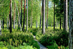 Path through Green Forest at Summer Royalty Free Stock Photo