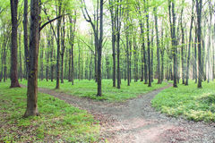 Path in green forest with sun beams Royalty Free Stock Image