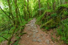 Path in green forest Royalty Free Stock Photos