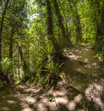 A path in the green forest winds around a bend Washington, USA. Hiking and traveling views near Mount Rainier in Washington over the summer Royalty Free Stock Images