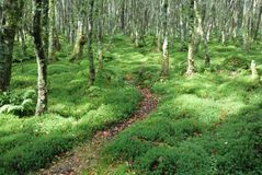 Path in green forrest Stock Image