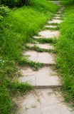 The path and green grass Royalty Free Stock Images