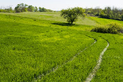 Path through the green grass. Green pathway through the grass stock photo