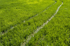 Path through the green grass. Green pathway through the grass stock photos