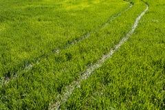 Path through the green grass. Green pathway through the grass Stock Photos