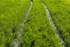 Path through the green grass. Green pathway through the grass Stock Images