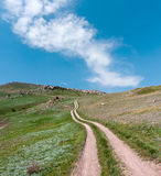 Path on green hill Royalty Free Stock Photography