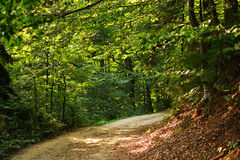 Path in green mountain forest Stock Photography