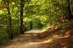 Path in green mountain forest Royalty Free Stock Photo