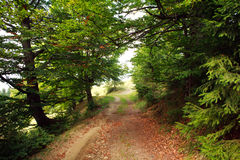 Path in green mountain forest Royalty Free Stock Image