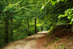 Path in green mountain forest Stock Photo