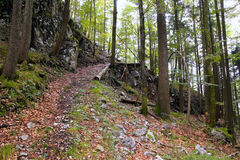 A path in the green mountains forest. Stock Photography