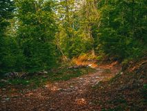 Path in green mystical forest. Beautiful nature. Morning walk.  royalty free stock image