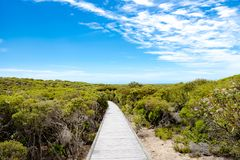 Path through green nature, Kangaroo Island, Australia Stock Photography