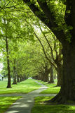 Path in the green park Royalty Free Stock Photo