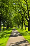 Path in green park. Recreational path in green park lined up with trees Stock Photography