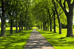 Path in green park. Recreational path in green park lined up with trees Stock Photo