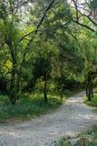 The path. Of green plantsn Stock Image