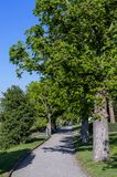 Path with green trees against blue sky Stock Image